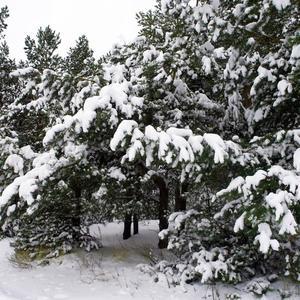 Под снежным одеялом...