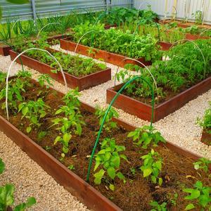 Любимый мини-огородик...