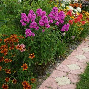 Любимый цветник вдоль дорожки
