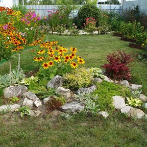 Любимые цветники возле дома