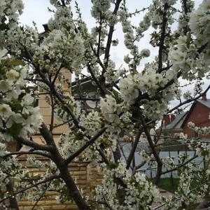 Буйное цветение нашего сада