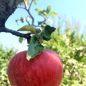 Плоды нашего сада