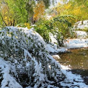 Такой снег зелень не боится. Он в воду быстро превратится.