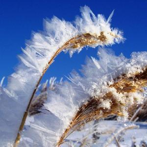 Снежная кристаллизация