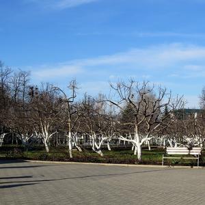 Яблоневый сад в Дивеево