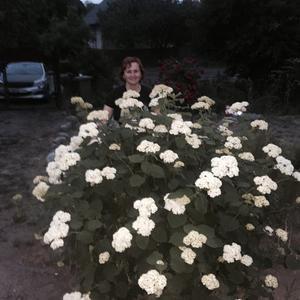 А это огромный красивейший куст гортензии