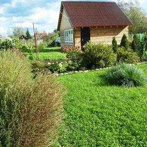 Вокруг осенние тона... а мой газон еще зеленый!
