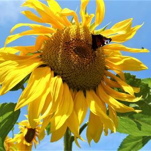 Очень желтый,очень яркий,очень солнечный цветок!!!!
