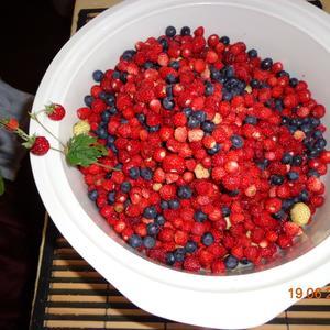 Целебные ягоды