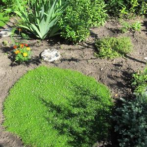 Пока зелёное пятнышко, а скоро станет газоном