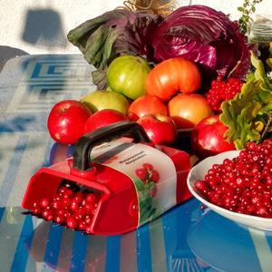 Последние помидоры с яблоками и первая клюква - это Осень