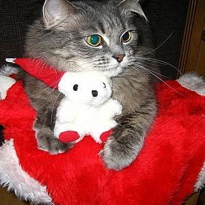 Новогодний костюм для бала кошек