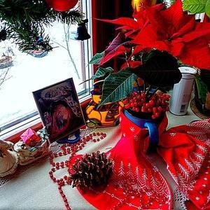 А в Рождество цветут рождественские звёзды