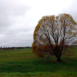 По дороге на дачу увидела такое красивое дерево