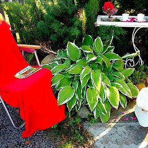 Чайный столик в саду