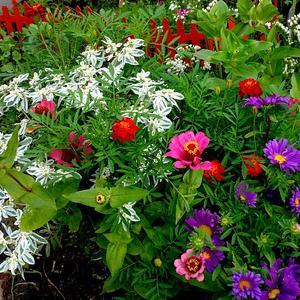 Они такие разные - летние цветы