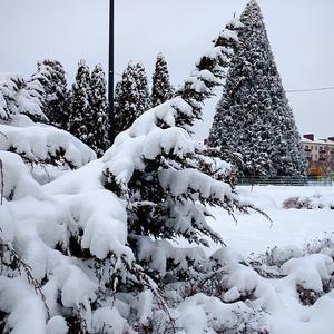 Зима пришла, а завтра ёлку будут убирать