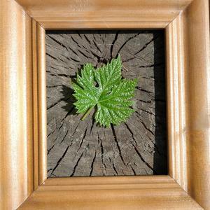 Виноградный лист - майский портрет