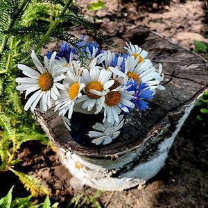 Не пень берёзовый, а кашпо для цветов