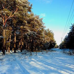 Сосновый бор в зимнем наряде