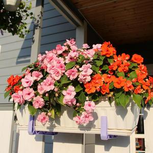 Бальзамин Фея цветов