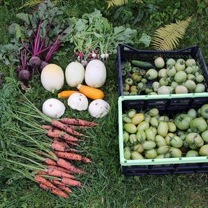 Спасаем урожай от дождей и холодов
