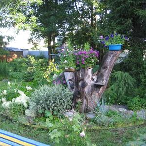 """Леший"" охраняет красОты сада"