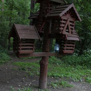 Пятикомнатная квартира для птиц