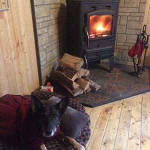 Рядом с камином тепло не только людям!!! (фотомодель Гера-нам 15 лет)