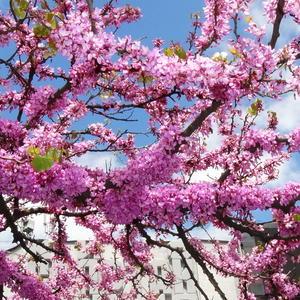 Весной даже палки цветут