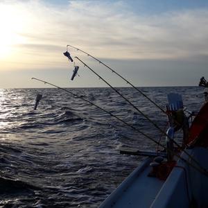 У дачная рыбалка