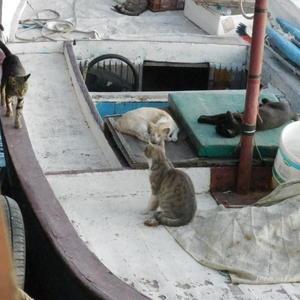 Рыбаки на отдыхе
