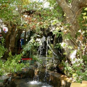 Сад эльфов