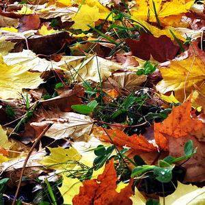Отутюжила осень