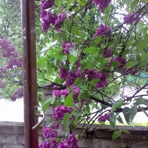 А из нашего окна....)