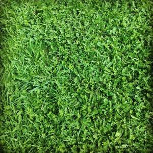 И снится нам травааа, травааа у дооомаааа, зелеееная, зелееенааая траваааа . . .