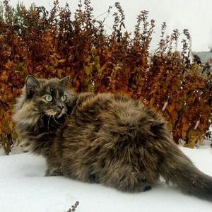 Зимняя охота: мышей не видали?
