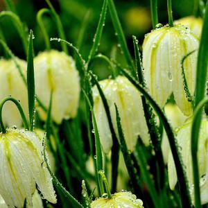 Умытые дождем цветы в саду моем