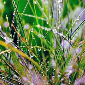 Капельки росы – мелодия от музы!  Скатились  по траве, как порванные бусы