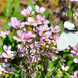 Утром бабочка проснулась,  улыбнулась, потянулась...