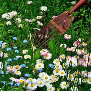 Скошенную траву граблями соберу