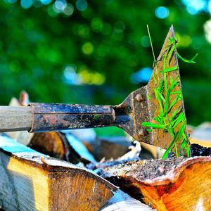 У тяпки кончилась трава, отдохнуть легла в дрова
