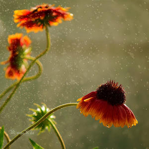 Дожди бывают от любви счастливые... Дождинки самоцветами горят... Дожди такие самые красивые и так к лицу им праздничный наряд