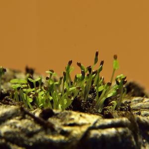Сей миг прекрасен: час  рождения , семян в  росток  преображение