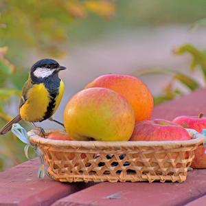 Вы – райское блаженство для души. Природа создала вас без ошибки: вкус, цвет и форма – чудо хороши!
