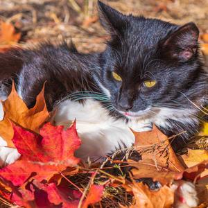 """Под солнцем ласковым лежит на куче листьев кот, от ветра он их бережёт: вдруг тот их унесёт?"""""""
