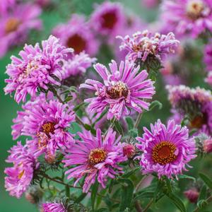 """""""Последние цветы - их слёз не видно,  уходит время грез, а как обидно... """""""