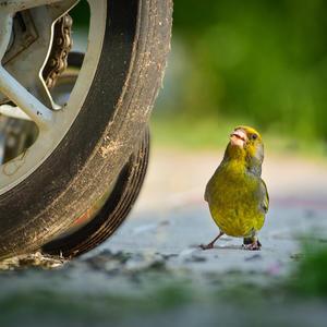 Way, велосипед!