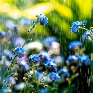 Я запомню навсегда солнца яркие улыбки в каждой капельке дождя!