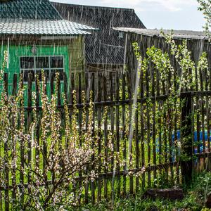 Вот это ливень – понимаю! Стеною дождь шумит в окне в последний день и вечер мая – напоминая о Весне!